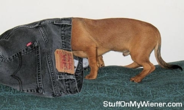 For all I know, an inspector is just a wiener dog...who am I kidding, I included this picture because of the URL.