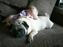 baby sleeping on pug