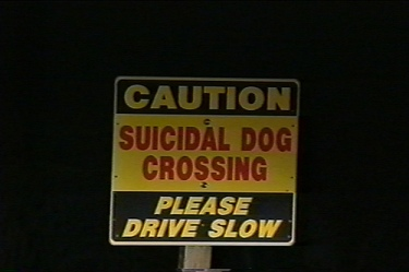 caution suicidal dog crossing