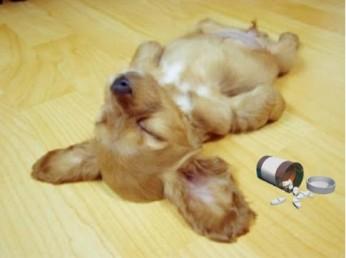 dog overdose