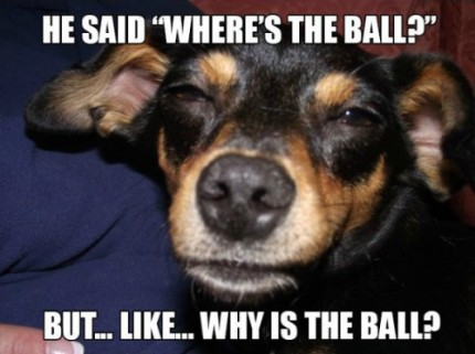 Really-High-Dog-Meme-Wonders-The-Big-Questions-About-The-Ball