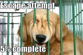 jail break cute