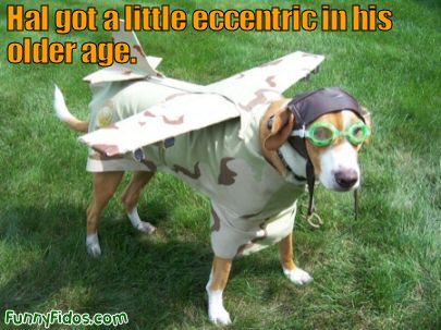 funny-dog-hal-got-eccentric